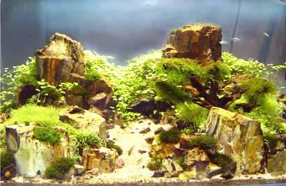 poisson d 39 aquarium plantes de d coration en tunisie. Black Bedroom Furniture Sets. Home Design Ideas